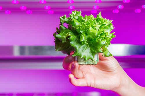 Philips LED Aydinlatma İle Sebze Meyve uretecek