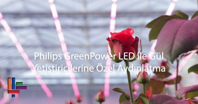 Philips GreenPower LED ile Gül Yetiştiricilerine Özel Aydınlatma