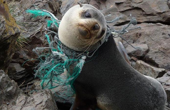 plastiklerin-canlilara-verdikleri-zararlar