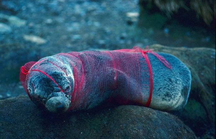 plastiklerin-deniz-canlilarina-verdikleri-zararlar